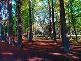 公園,紅葉