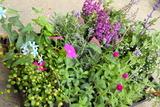 夏の花壇,夏,花,苗