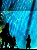 水族館,アクアマリン,ふくしま