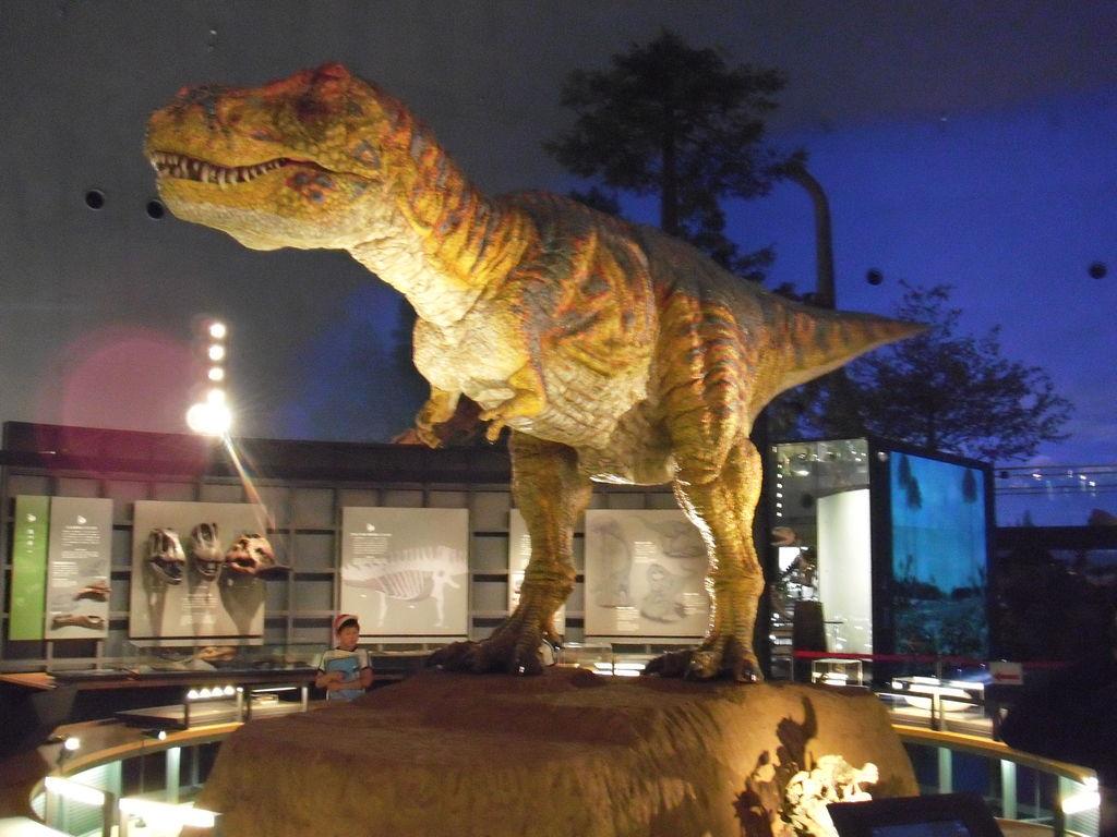 福井の恐竜博物館!割引はあるの?かかる費用は? …