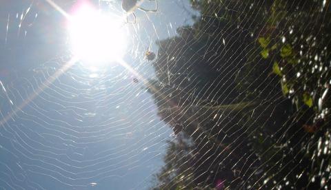 網を張り天に秋の日の女郎蜘蛛201110