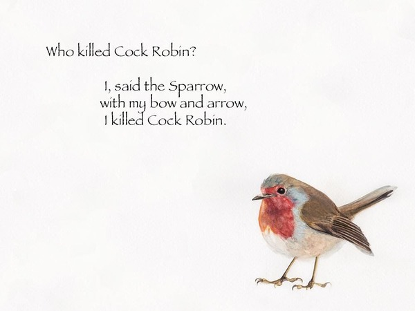 th_Robin