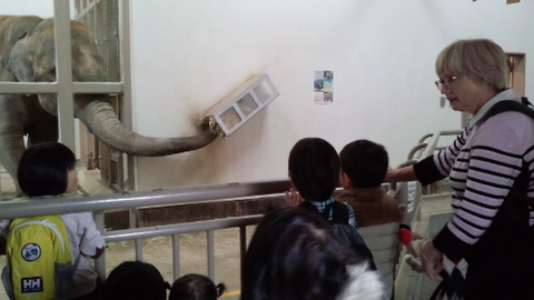 kumata elephant