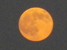 blue moon4