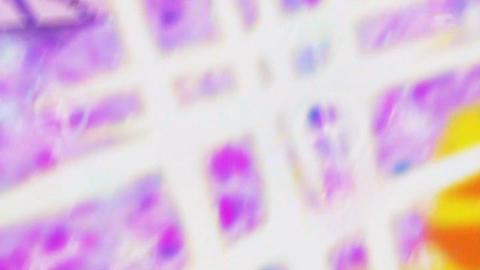 キラキラプリキュアアラモード第31話-436