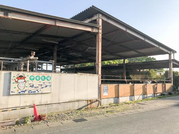 nakayasu_cow (1)