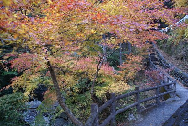 shirakurakyokoyo (3)