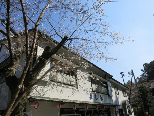 sakura_dango_get (12)