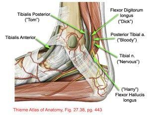 管 足 症候群 根 足の裏だけがしびれる原因は?「足根管症候群」について