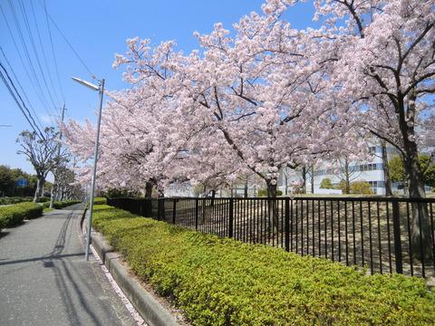 hamachan_2012のブログようこそ                hamachan