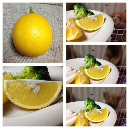 2013/12/16:今日のレモン