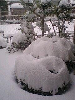 1月の大雪