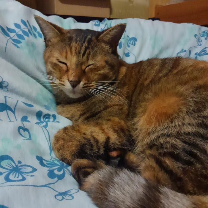 猫の餌の量と回数はどれくらいが適正?大きさや年 …