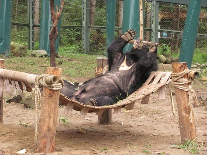 Chill-Like-A-Bear-11