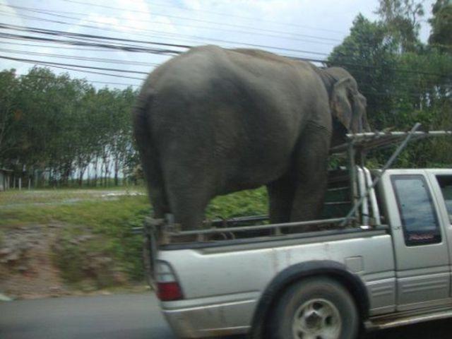 transport45
