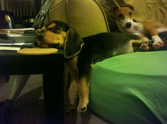 pets_dont_always_get_how_human_furniture_works_640_09