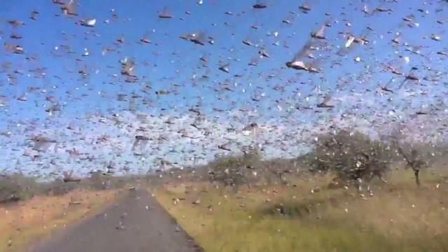 locusts-swarm-madagascar