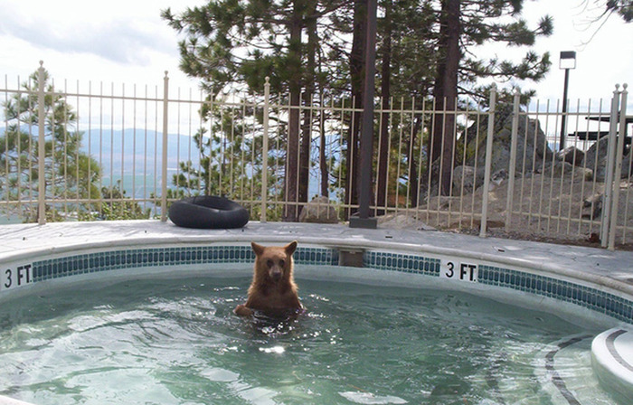 Chill-Like-A-Bear-1