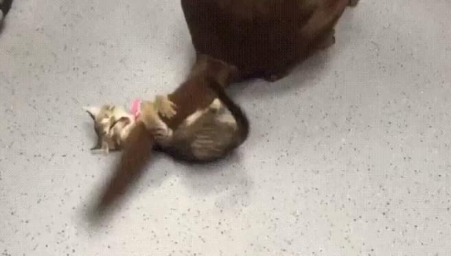 犬のしっぽ