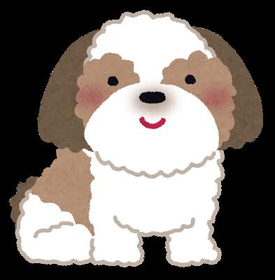 dog_shih_tzu