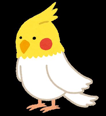 bird_okameinko