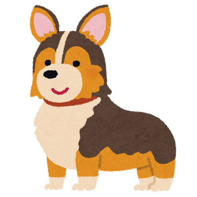 dog_corgi_tricolor