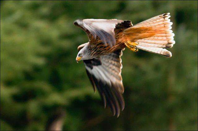 falcon00