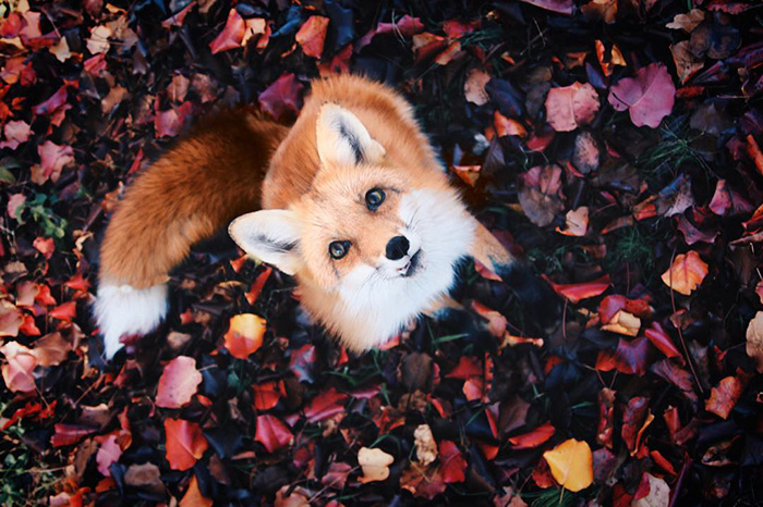 fox20