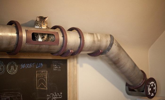 cat003
