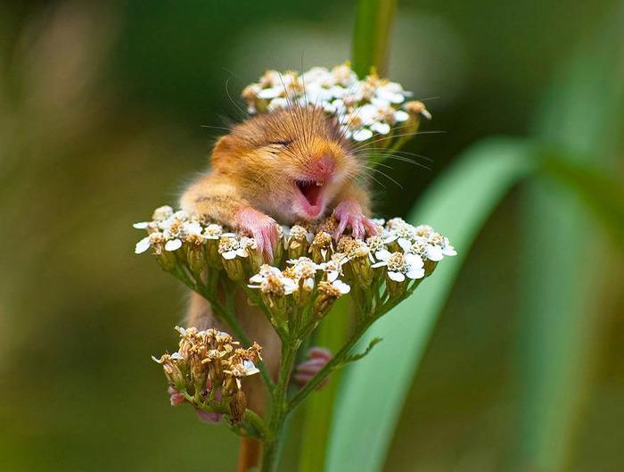 mice03
