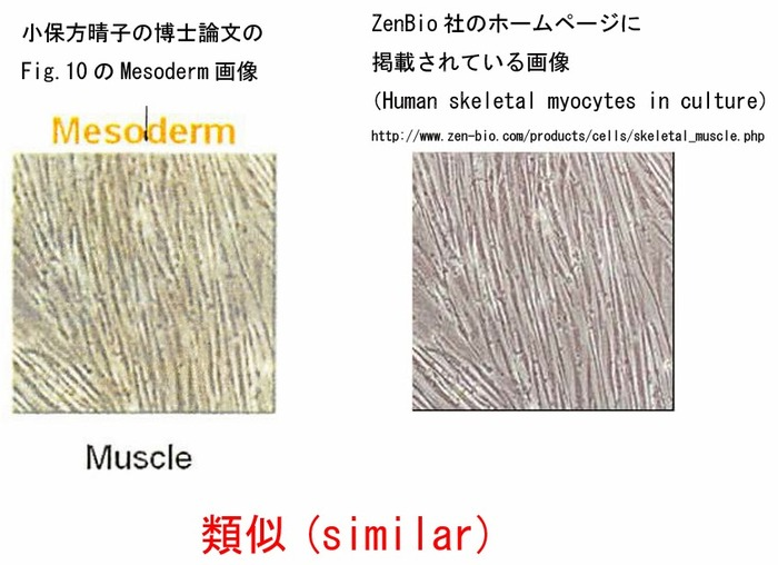 Fig10Muscle (1)