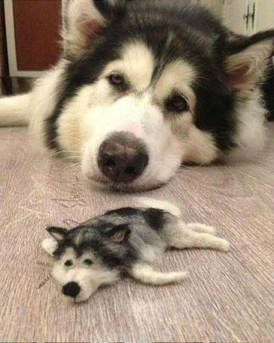 Animal Mad Dog Grooming