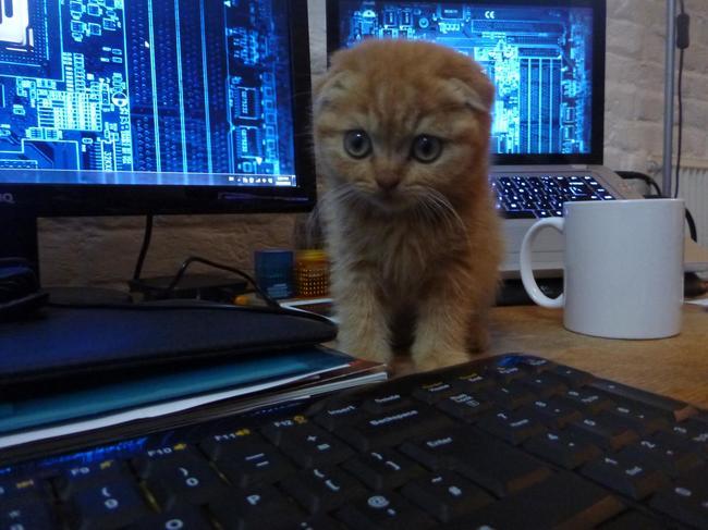 cat22