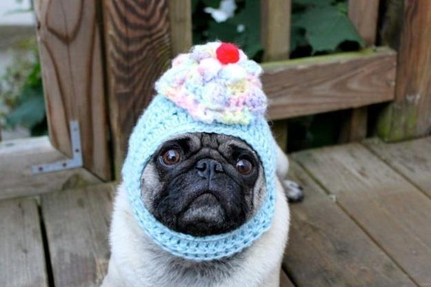 パグ犬のおもしろケーキコスプレ画像