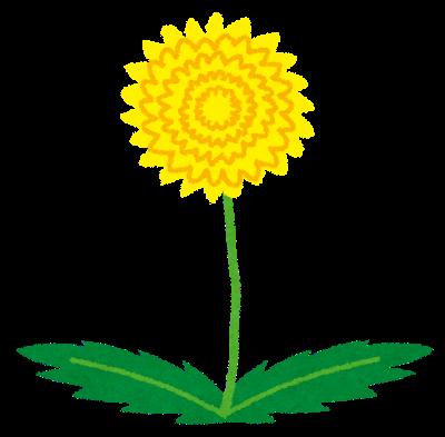 flower_tanpopo
