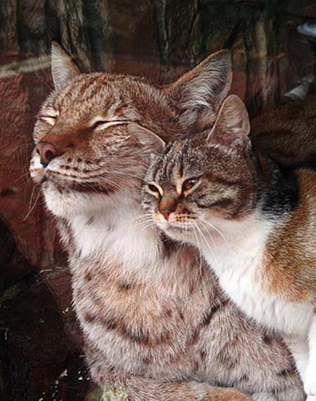 猫とPCケース 79台目 YouTube動画>19本 ->画像>577枚