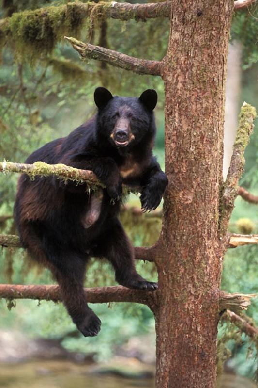 木登りするかわいいクマ