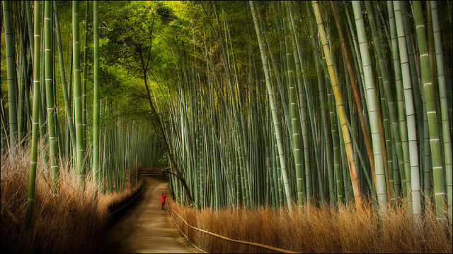 fantastic_bamboo_grove_in_japan_640_01