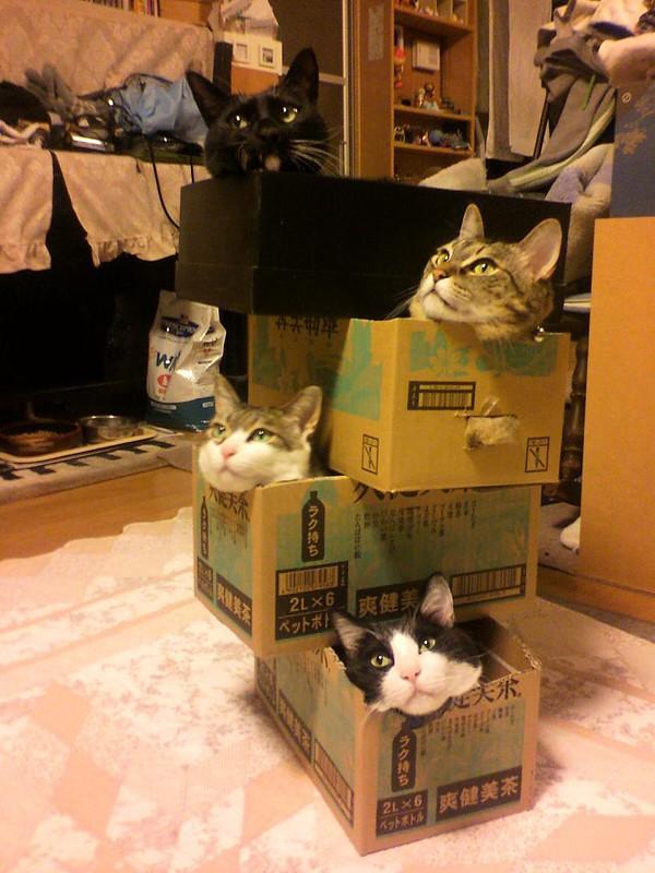 cat033