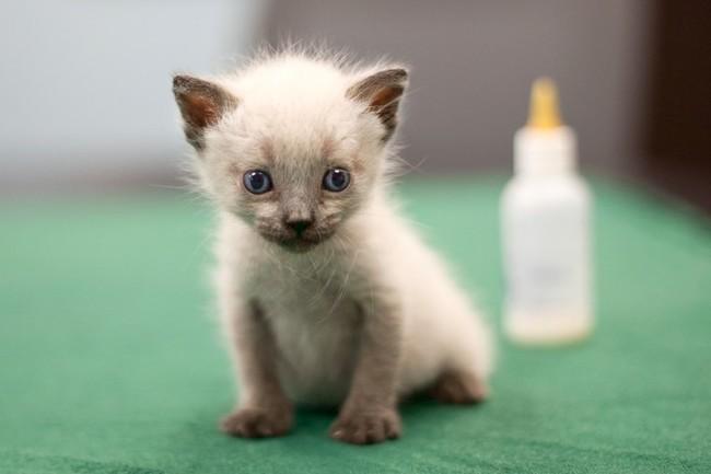 cat24