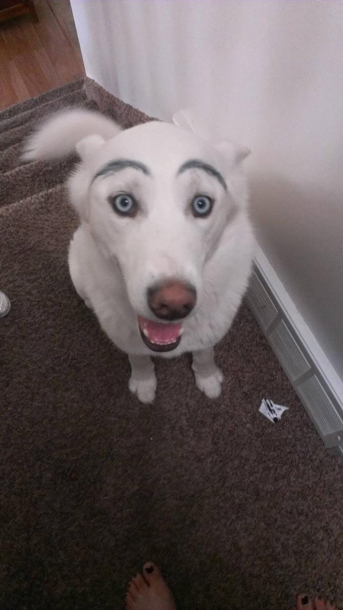 mayudog20