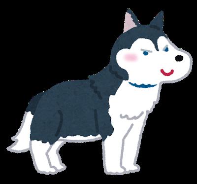 dog_siberian_husky