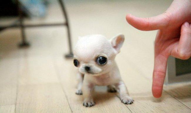 小さすぎるかわいい子犬