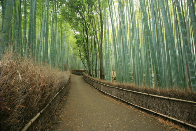 fantastic_bamboo_grove_in_japan_640_02