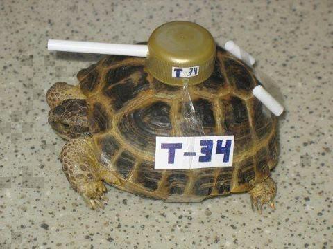 turtle00