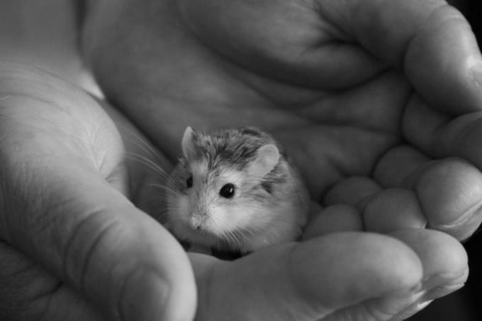tiny_animal(31)