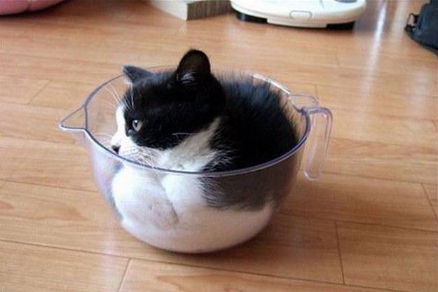 cat00