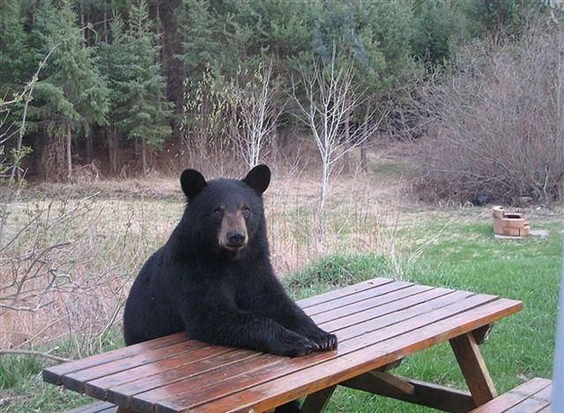 テーブルで待つかわいいクマ