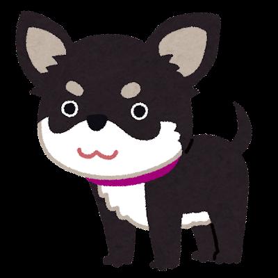 dog_chihuahua_black_tan