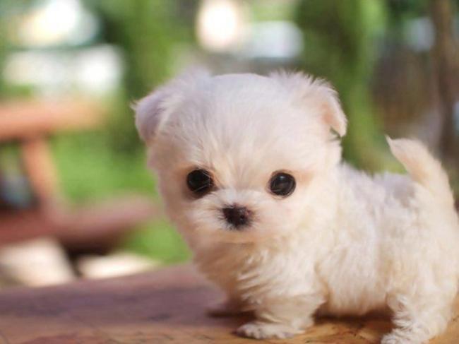 つぶらな瞳のかわいい子犬